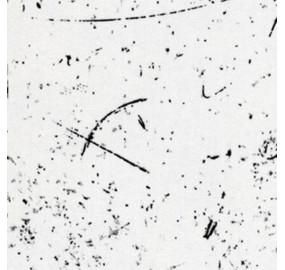 Стеновая панель Кедр 2919/S Асимметрия (3-я группа, длина 4.1 м)
